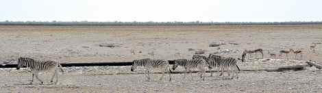 Arid plains of Etosha, Namibia