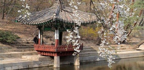 Pagoda and cherry blossoms in spring