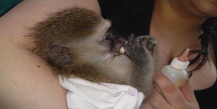 Bottle feeding a baby