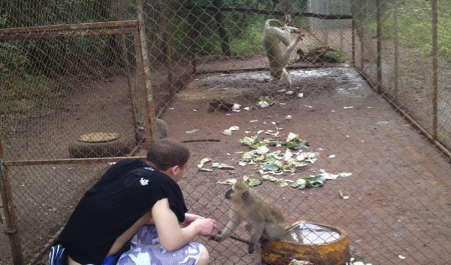 Attending to the monkeys in their enclosures