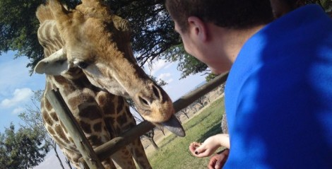 Making friends with the local giraffes