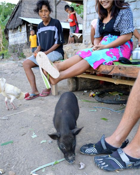Many rural people in Bali live by the animals they keep - mostly pigs and chickens they can sell in the market