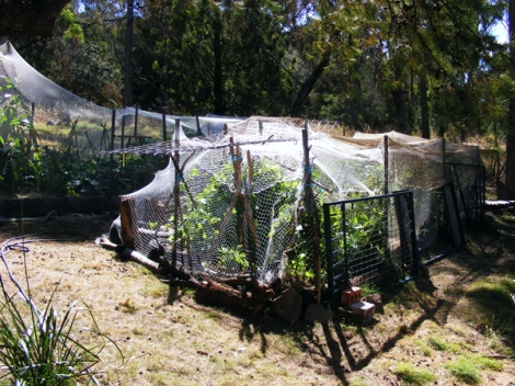 The lengths that we had to go to in order to harvest ANYTHING from our first veggie garden (spring and summer 2012). The possums and wallabies ruled the night and we had to fix what they had invaded in the day. This years enormous fully enclosed garden is our way of ensuring that we get a fair proportion of what we sow
